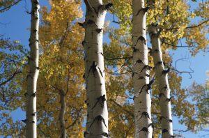 6166 arbres